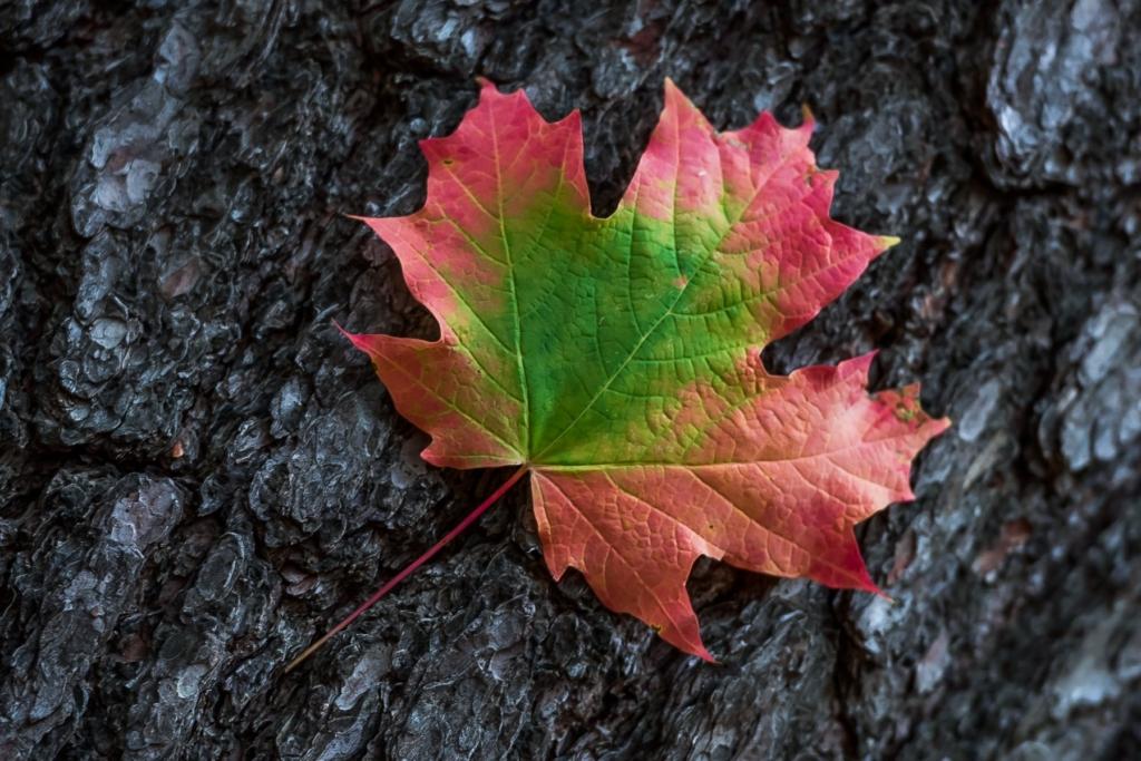 nature-autumn-61612829