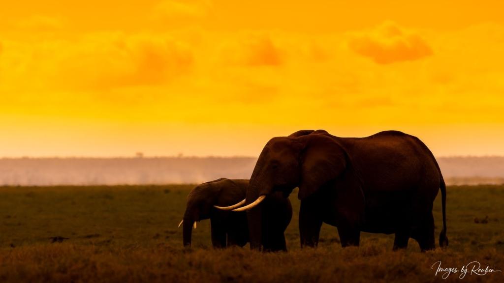 wildlife-at_dawn_and_dusk-39315732