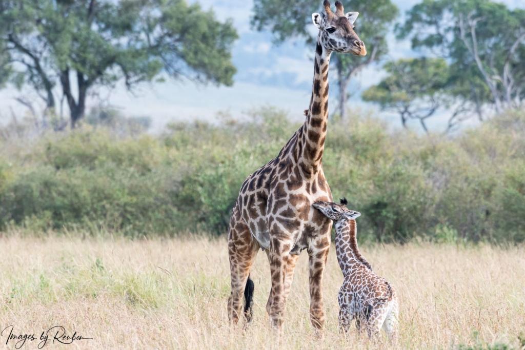 wildlife-offsprings-16581565