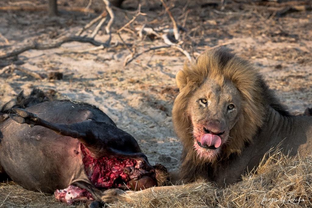 wildlife-the_kill-62992117